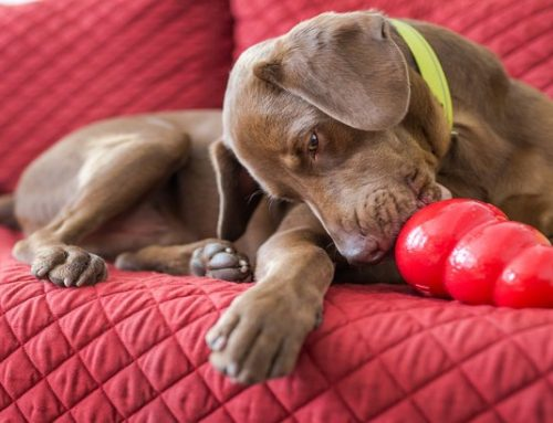 Top Rated Indestructible Dog Toys