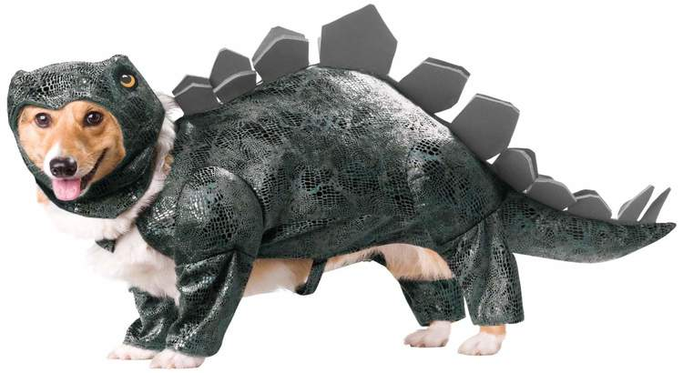 Corgi in dinosaur costume with foam spikes on the top