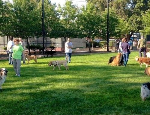 How To Help Ensure Dog Park Safety