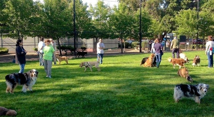 Pet parents standing around a dog park of green grass while pups are seen walking around