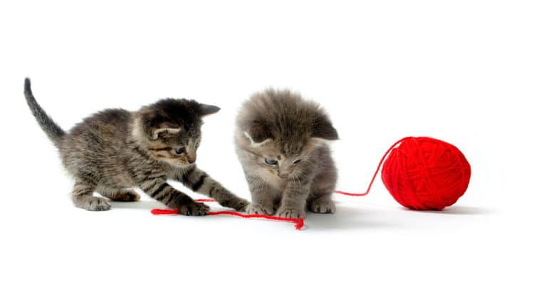 Two grey kittens playing with a red ball of yarn