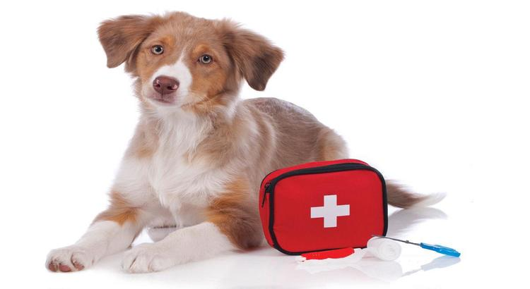 Medium sized brown dog laying on the ground with a pet first aid kit next to him