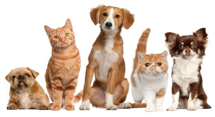 A combination of dogs and cats in one home covered with a Pin Paws Plus membership