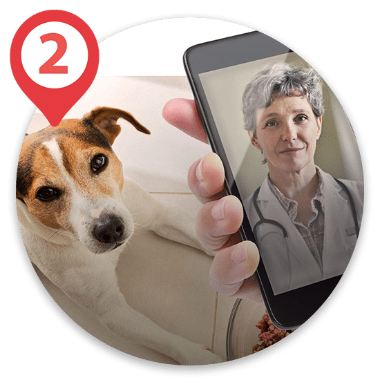 Veterinarian on phone to help with sick pet advice