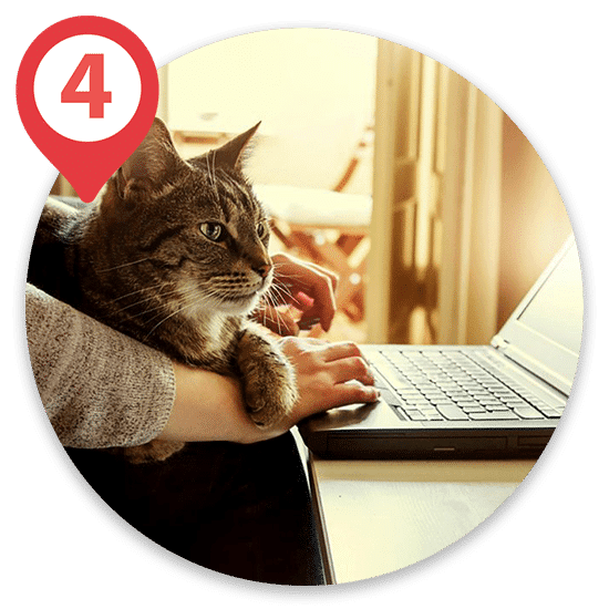 Cat sitting on owners hands and arms while owner types on laptop