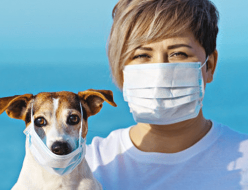 Coronavirus & Pets: What You Need to Know
