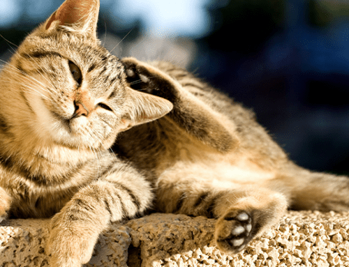 Pet Allergies: Symptoms, Causes and Natural Remedies
