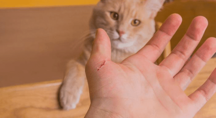 orange cat in the background with a person's hand in the forefront who has been scratched