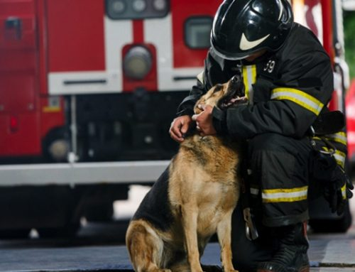 Fire Safety Awareness & How to Perform Pet CPR