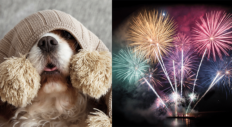 dog covering his head with a blanket and fireworks going off